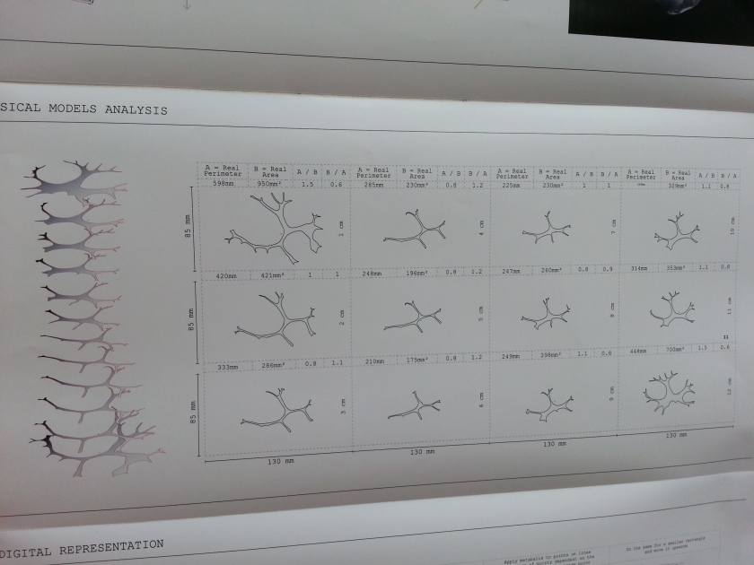 Marilu Valente's diagramming of the  bio-polymer stretch