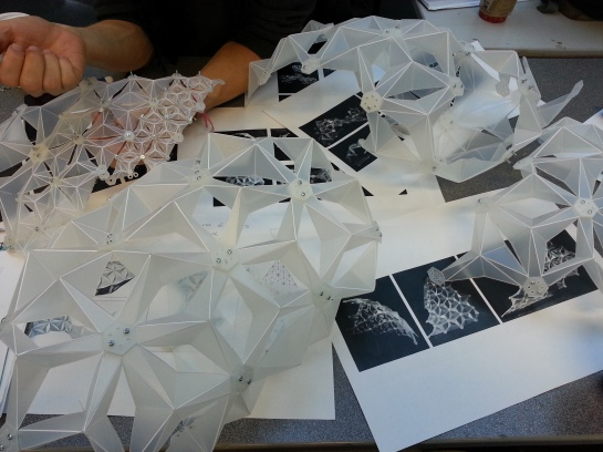 Polypropelene Modular Origami by Sarah Shuttleworth