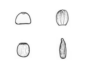 shapes copy
