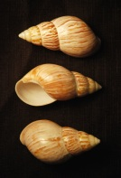 Shell example 2