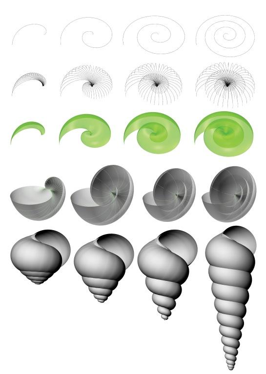 shells2