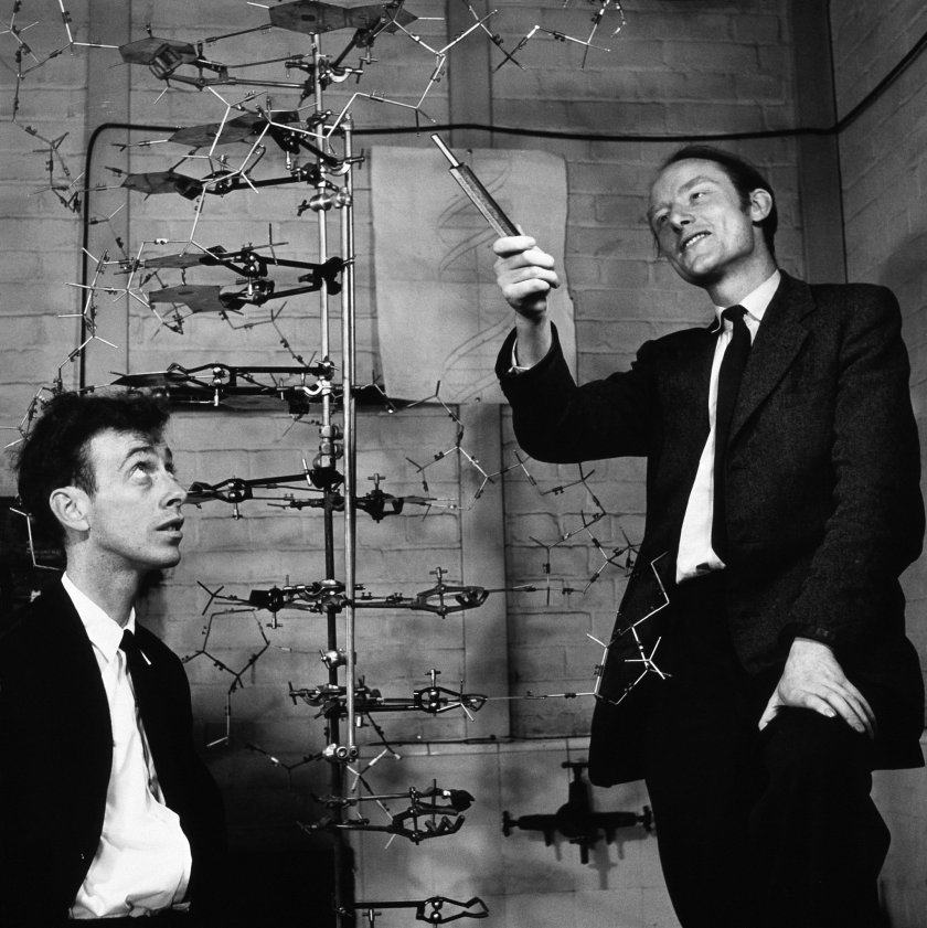 Watson-Crick-DNA-model.jpg