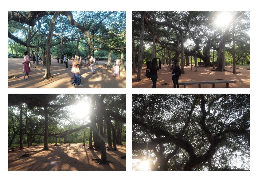 banion-tree