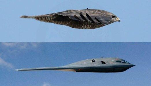 Biomimicry-Bird-Plane